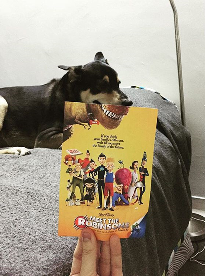 instagrammer-combines-famous-movie-posters-with-real-life-puppies-1__700