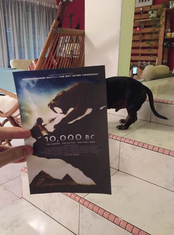instagrammer-combines-famous-movie-posters-with-real-life-puppies-2__700
