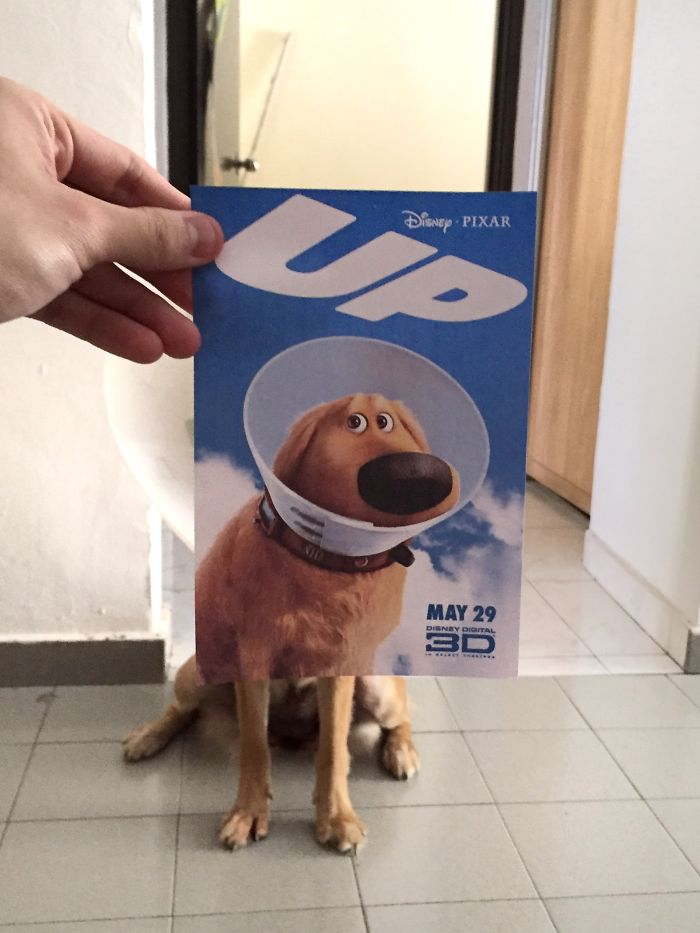 instagrammer-mashes-up-famous-movie-posters-with-real-life-puppies-2__700