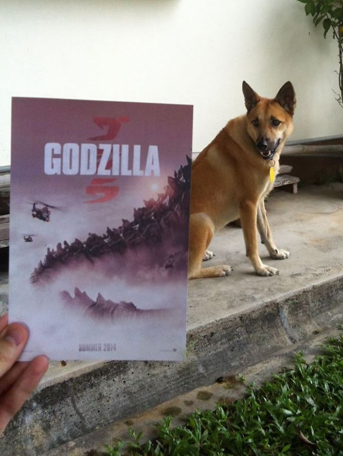 instagrammer-mashes-up-famous-movie-posters-with-real-life-puppies-9__700