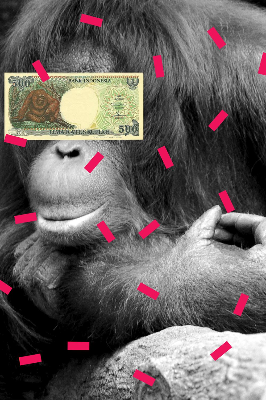 zein-alitamara-mufthihati-orangutan-face-extinction