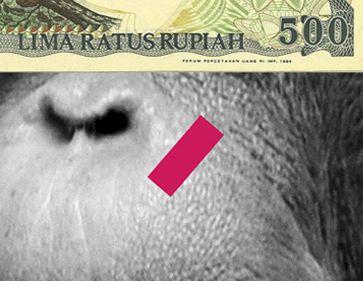 zein-alitamara-mufthihati-orangutan-face-extinction1